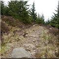 NY6295 : Deadwater Trail, Kielder Castle by Rich Tea