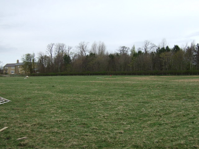 Grazing and woodland, Ulgham Park