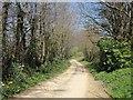 SX3378 : Lane to Lezant by Derek Harper