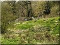 SD5831 : Brockholes Nature Reserve, Boilton Wood by David Dixon