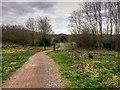 SD5831 : Path in Brockholes Nature Reserve by David Dixon
