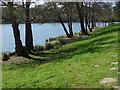 SU9769 : Virginia Water by Alan Hunt