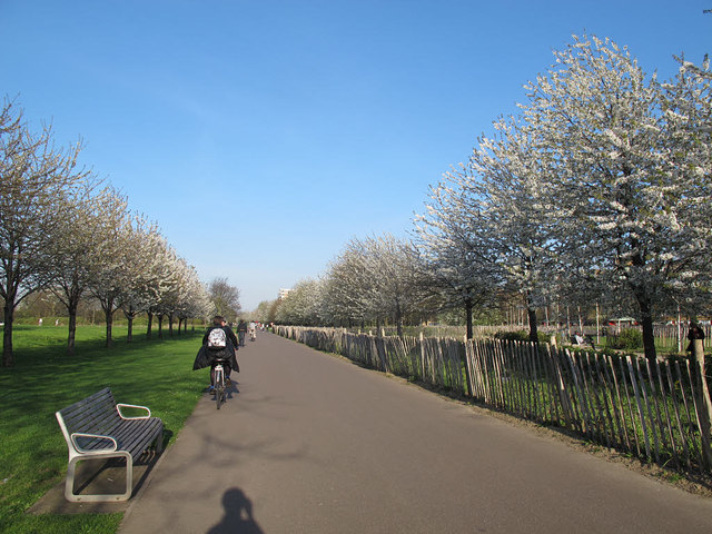 Spring blossom in Burgess Park