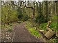 SD5831 : Path in Boilton Wood by David Dixon