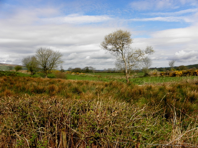 Carrigans Townland by Kenneth  Allen