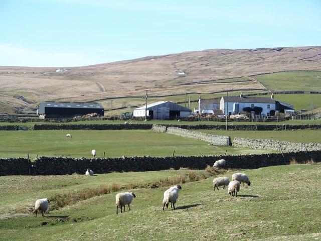 Sheep pastures at Herdship
