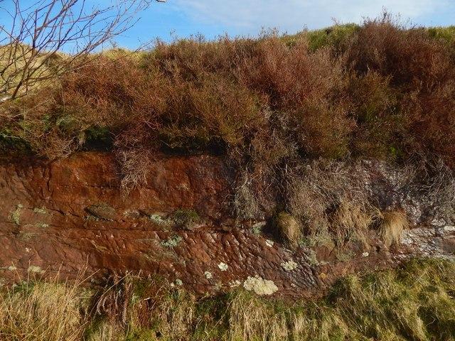 Old sandstone quarry: detail