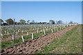 TQ3398 : Vineyard, Forty Hall Farm, Enfield by Christine Matthews