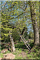TQ3398 : Ladder in Woodland, Forty Hall Farm, Enfield by Christine Matthews