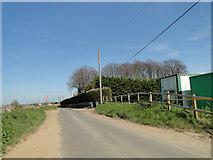 TM3656 : School Road near Limetree Farm by Adrian S Pye