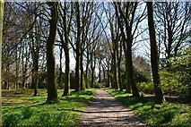 SD4615 : Garden path at Rufford Old Hall by David Martin