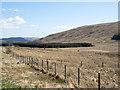 NS2889 : Roadside fence in Glen Fruin by Trevor Littlewood