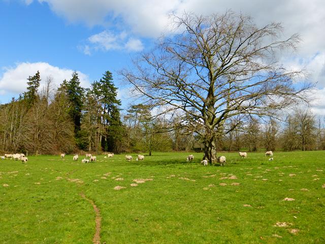 Pasture, Bagshot, Shalbourne