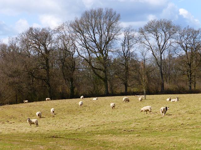Pasture, Little Bedwyn