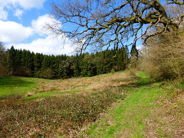Woodland, Shalbourne