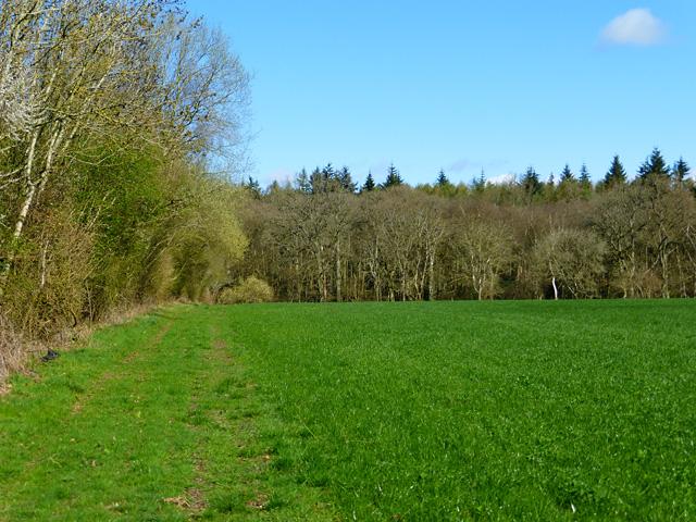 Wood and farmland, West Woodhay