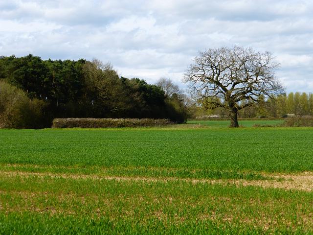 Farmland, Ruscombe