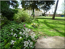 TQ1776 : Looking towards the Great Conservatory at Syon House from the gardens by Marathon