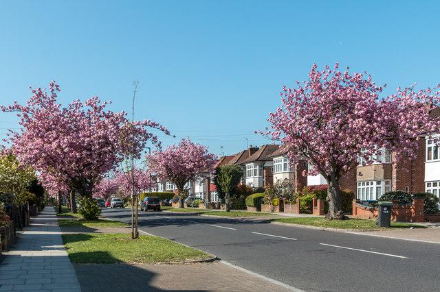 Bincote Road, Enfield