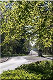 TQ2897 : Young Leaves, Trent Park, London N14 by Christine Matthews