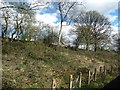 TL5003 : Shallow wooded cutting, east of North Weald Station by Christine Johnstone