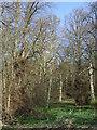 NZ0462 : Cottagebank Wood by JThomas