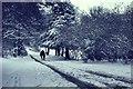 TQ2907 : Peacock Lane Under Snow by Peter Jeffery