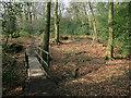 SU8091 : Footbridge in the woods by Des Blenkinsopp