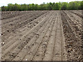 TF8232 : Drilled field south of Docking Road by Evelyn Simak