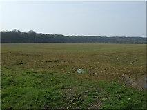 NZ1882 : Crop field towards Gubeon Plantations by JThomas
