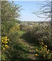 SX2183 : Path near St Clether by Derek Harper