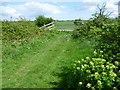 TQ7277 : Marshland scene near Boatrick House by Marathon