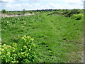TQ7277 : Looking across Cliffe Marshes to Cliffe Church by Marathon