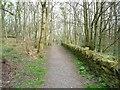 "SE0917 : ""Go ahead to a wood"" by Christine Johnstone"