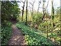 SJ9493 : Pole Bank Woods by Gerald England