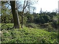 SP8306 : Cymbeline's Castle - Trees and shrubs by Rob Farrow