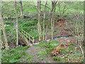 NZ3609 : Footbridge at Moor Plantation by Mick Garratt
