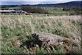 NJ6229 : Inschfield Recumbent Stone Circle (6) by Anne Burgess