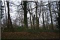 TG0705 : Farthingale Wood by N Chadwick