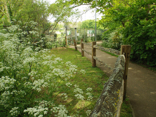 Timber fence by footpath through Blatchington Court Woods, Seaford