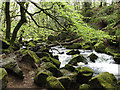 SX2268 : Golitha Falls on the River Fowey by Gareth James