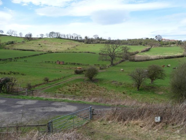 Cattle pasture, below Lease Rigg