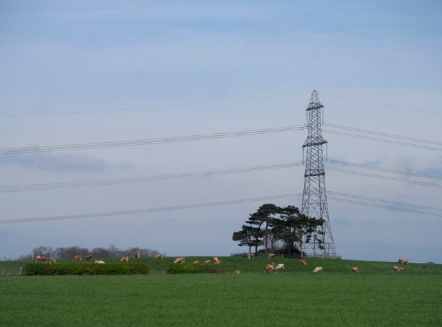 Prominance, pine tree, pylon and cows