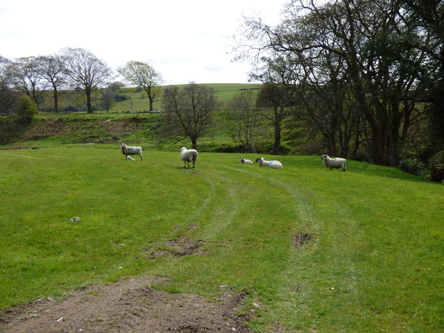 Blacko Foot: some sheep