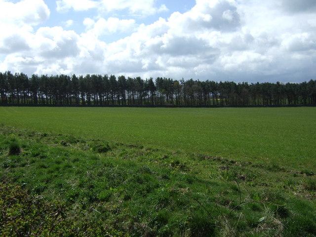 Crop field towards North Wood