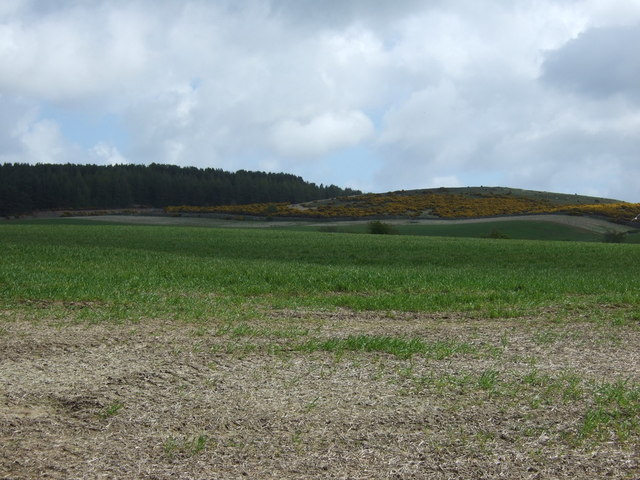 Crop field north of Holburn