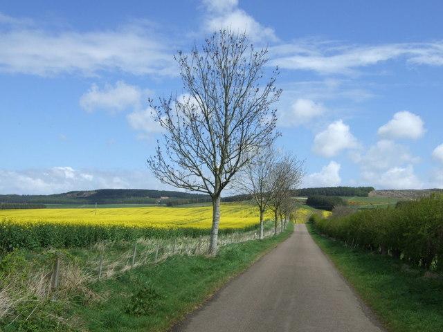 Minor road towards Belford