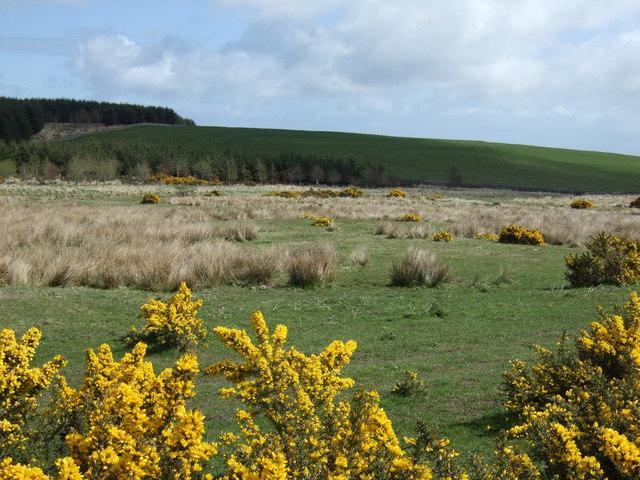 Rough grazing, Hazelrigg Moss
