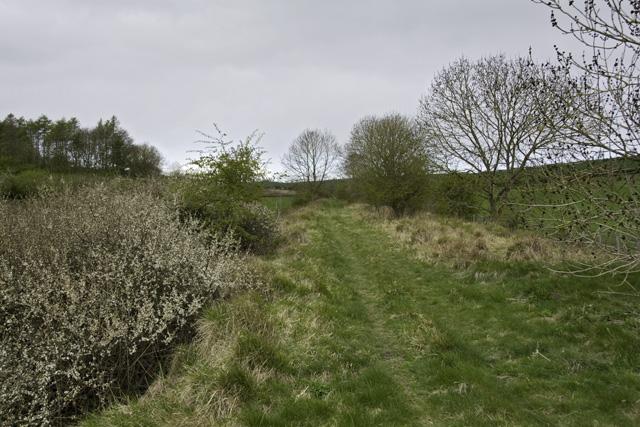Disused railway line near Fimber, E Yorks