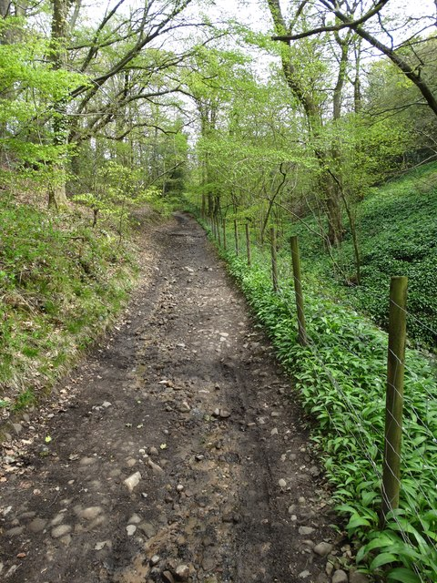 Path from Bottom's Hall to Linnet Clough
